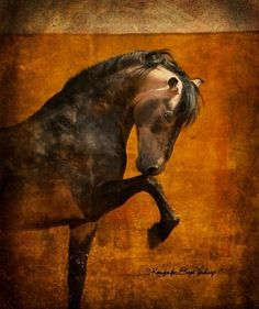 ©Kimberly Boyd Vickrey www.kimvickrey.com fb: Kim Boyd Vickrey equestrian photographer
