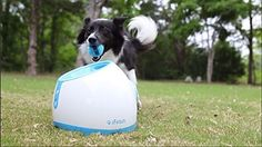 iFetch: Playing an Old Game with a New Twist | All Pet Cages