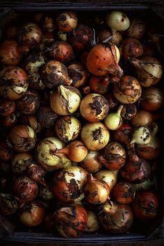 onions by Agnieszka Krach/ na krachym spodzie