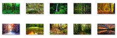 Tranquil Forest Windows 7 Theme with sound effect