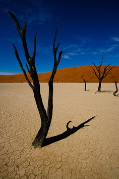 Outdoor Sanctuaries, Namibia (by m'sieur rico) Desert Places, Outdoor Pictures, Out Of Africa, World's Fair, Science And Nature, Belle Photo, Beautiful Landscapes, Places To See, Exotic Plants