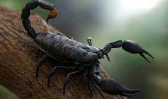 Скорпион — один из самых важных знаков Зодиака. Он похож на ангела, танцующего в темноте.Счастливая женщина