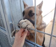 No Kill: Hayden Law, Overcrowding California Animal Shelters (Graphic Video)