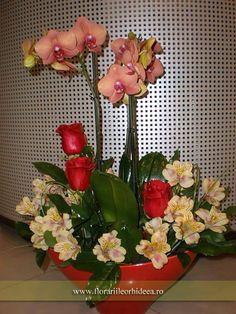 Orhidee phalaenopsis corai la ghiveci,  trei trandafiri rosii si alstroemeria Plant