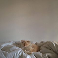 Cat Care - The Proper Ways to Make a Difference in Their Lives I Love Cats, Cute Cats, Funny Cats, Crazy Cat Lady, Crazy Cats, Animals And Pets, Cute Animals, Fluffy Animals, F2 Savannah Cat