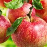 16 Zero Calorie Foods That Work Wonders For Your Health - Avocadu Weight Loss Programs