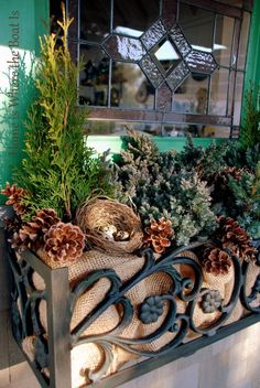 Window box--love the wrought iron--lined with burlap and filled with winter greens and plnecones--from Mary