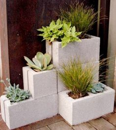Small potted plants in bricks