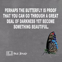 perhaps the butterfly
