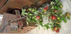 Hibiscus House: Little Fruit Harvest