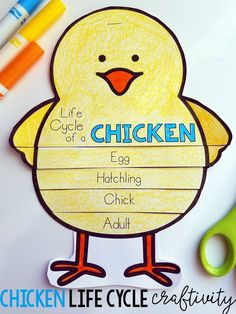 Life Cycle of a Chicken Craft!  Perfect for K-2!