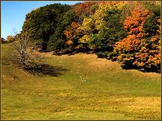Hillside. Washington County, NY Photo: Kendall McKernon