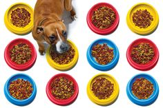 The billion-dollar, cutting-edge science of convincing dogs and cats to eat what's in front of them.