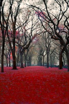 Central Park Trees Photograph  red black gray  wall by Raceytay, $30.00