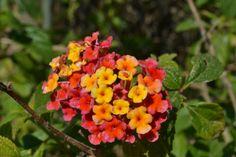 Flor ~ Reserva Ecológica Costanera