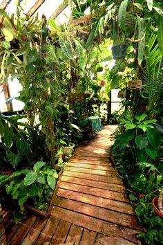 Build your own tropical rain forest. How to build a tropical rainforest in your back yard with Exotic and rare tropical plants and animals from the rainforest Tropical Backyard, Tropical Plants, Exotic Plants, Permaculture, Garden Entrance, Main Entrance, Atrium Garden, Jardin Luxuriant, Arquitetura