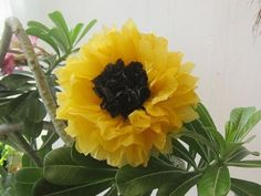 recycle plastic bags- sunflower - YouTube