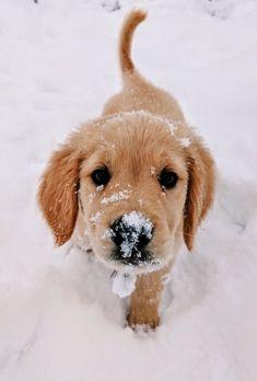49 Best Future Fluffy Friend Images In 2019 Cute Dogs Cute