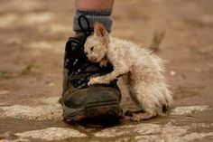 Kitten clinging onto U.S. soldier's boot. <3 kitty was rescued