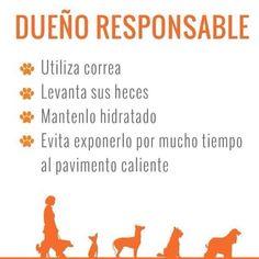 Se un dueño responsable   #PetsWorldMagazine #RevistaDeMascotas #Panama #TenenciaResponsable #RSE
