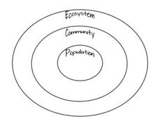 This ecosystem circle map could be drawn on the board to introduce the lesson. Students could be asked to fill in the bubbles given the words before the answer is revealed to get them thinking. Science Lessons, Teaching Science, Science Education, Life Science, Science And Nature, Science Experiments, Science Ideas, Fourth Grade Science, Middle School Science