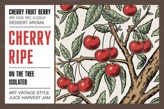 Cherry ripe fruit food tree isolated by Vintage on @creativemarket
