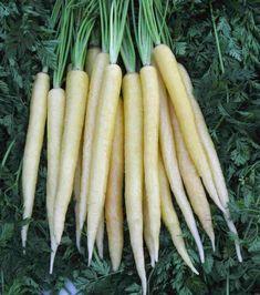 Carrots original color