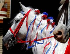 decorated horses for fourth of july - Google Search