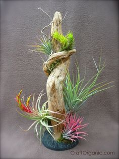 Beautiful airplant display