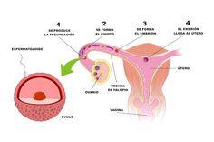 Imagen de la reproducción. Describe en word, lo que representa la imagen y entrégalo al maestro. Entregar el 16 de marzo Vagina, Making Decisions, Teachers, March