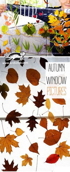 AUTUMN WINDOW PICTURES