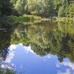Lacul cu nuferi a ramas fara nuferi ... :(