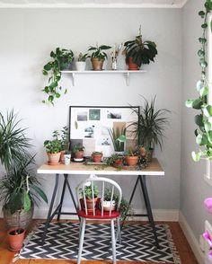 Hello Monday! Back to the desk, back to more plants! Happy new week everyone!  :@byhelgam #urbanjunglebloggers
