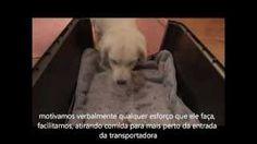 Crate training Claudia Estanislau - YouTube