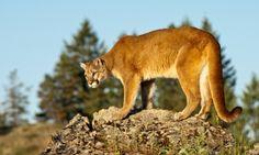 colorado+animals | Pictures Of Colorado Animals