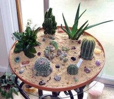 Indoor Cactus Garden Indoor cactus garden great outdoors pinterest indoor cactus i am slowly working on one of these ideas see more indoor cactus garden workwithnaturefo