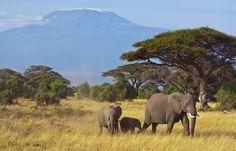 Wohin in Afrika- Eine Entscheidungshilfe für Ihre Afrika-Reise