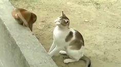 Обезьяна прыгает по терпеливой кошке