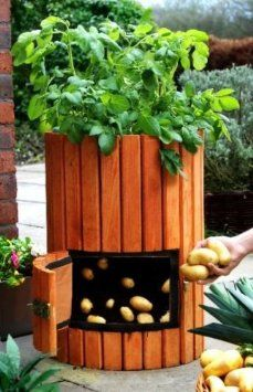 How to Use a Potato Bag and Planter Barrel