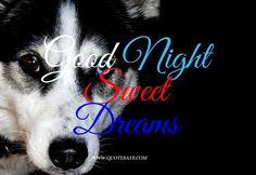 Good Night Dog Beautiful Good Night Images, I Love You Images, Good Morning Images, Inspiring Quotes About Life, Inspirational Quotes, Good Night Qoutes, Good Night To You, Good Night Flowers, Beautiful Flowers Wallpapers