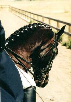cool braids to do on a horse - Google Search