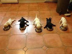 Funny pictures about Five little puppies. Oh, and cool pics about Five little puppies. Also, Five little puppies. Little Puppies, Cute Puppies, Cute Dogs, Dogs And Puppies, Doggies, Labrador Puppies, Baby Dogs, Dogs 101, Labrador Retrievers