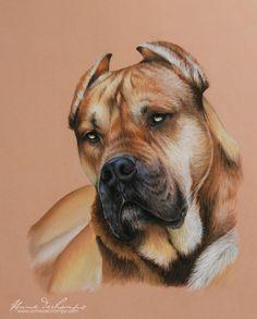 Jubi - Alano espanol Pastel Art, Labrador Retriever, Pitbulls, Dogs, Animals, Labrador Retrievers, Animales, Pit Bulls, Animaux