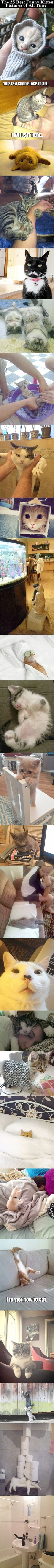 Spectacular -> Funny Cat Cover Photos For Facebook ;-D