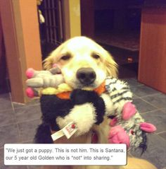 funy animals dog with toys