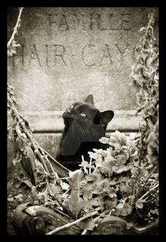 le chat noir by Polstar-Photography on DeviantArt