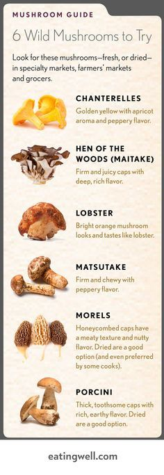 Our favorite wild mushrooms plus recipes.You can find Mushroom hunting and more on our website.Our favorite wild mushrooms plus recipes. Edible Wild Mushrooms, Growing Mushrooms, Stuffed Mushrooms, Culture Champignon, Mushroom Guide, Morel Mushroom Recipes, Mushroom Fungi, Wild Edibles, Edible Plants