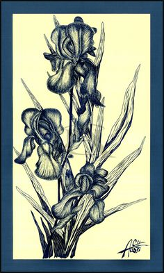 Iris | Original artwork | Fine-liner on fabriano paper