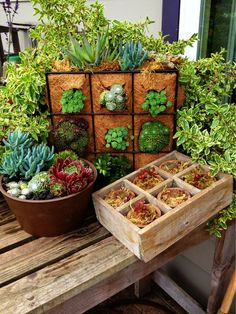 North Star Nursery Garden & Home - Fort Bragg, CA, United States. Savvy Succulents...