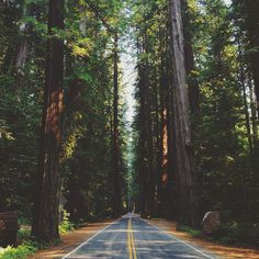 Avenue of the Giants, Humboldt Redwoods State Park, California